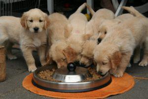 dog food allergy symptoms skin
