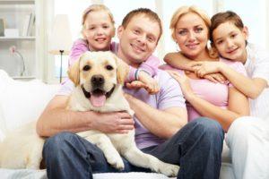 Dog Seasonal Allergies Symptoms