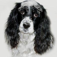 best dog shampoo for allergies