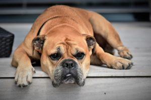 signs of allergies in dogs