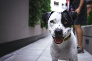 dog food allergy symptoms