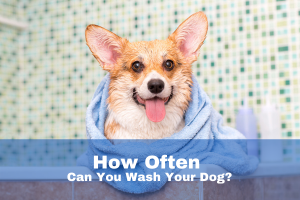 how to wash a dog with skin allergies